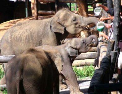 Elefantentour